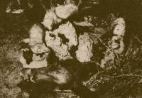 1976 expo animaux 4